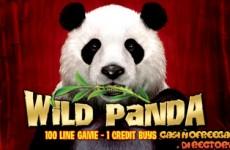 wild-panda-slot