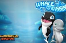whaleowinnings