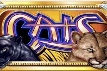 cats-slot
