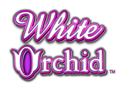 White-Orchid-slot