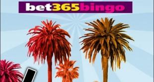bet365bingo